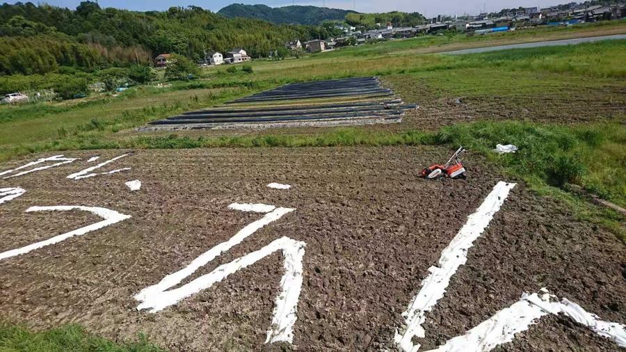 京源商事が冷凍野菜の輸入に取り組む理由